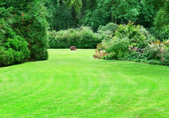 7 Easy Tips for the Perfect Lawn